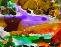 priscilla-fernandes-salopards-en-casquettes-phakt-2014-2